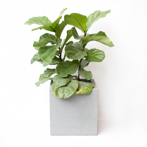 Gray Cube Planters
